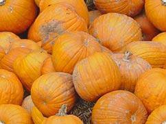 pumpkin bachground