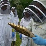 dean forest bees